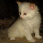 Снежный котик 17
