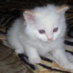 Снежный котик 2