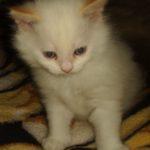 Снежный котик 23