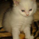 Снежный котик 26