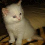Снежный котик 28