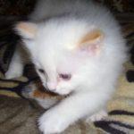 Снежный котик 3