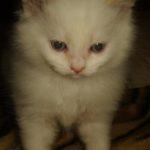 Снежный котик 30