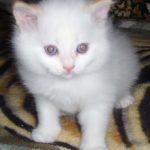 Снежный котик 4