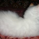 Снежный котик 41
