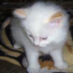 Снежный котик 6