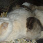Глава Кошкиного дома 2