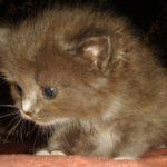 Дымчатый котик 9