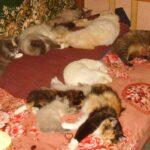 Как ухаживать за котятами, кошками и котами