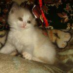 Котик белый 10