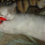 Котик белый 16