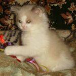 Котик белый 18