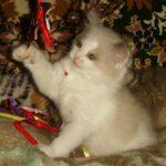 Котик белый 19