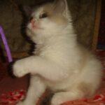 Котик белый 20