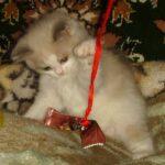 Котик белый 22