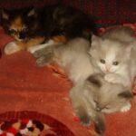 Котик белый 3