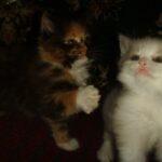 Котик белый 4