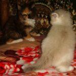 Котик белый 5