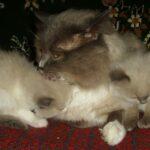 Котик белый 6