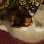 Котик белый 7