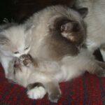 Котик белый 8