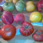 Семенной фонд помидор 2