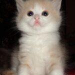 Персиковый мальчик
