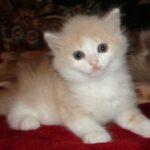 Персиковый мальчик 2