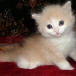 Персиковый мальчик 4
