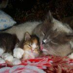 Питомник «Кошкин дом»