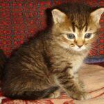 Котёнок Васька