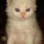 Котёнок Снежочек