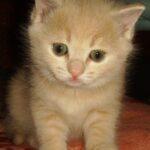 Кошечка, Солнышко
