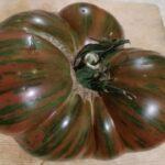 Наш семенной фонд помидор