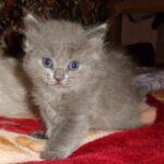 Котёнок Дымок — Мишуха